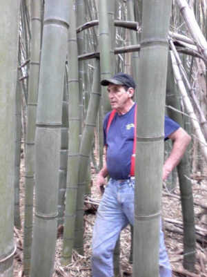Giant bamboo with person.png