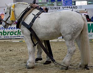 Percheron 1 stehend links.jpg