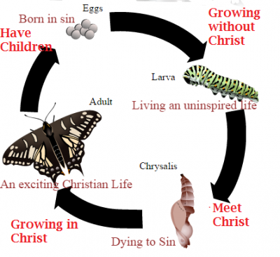 Butterfly Christian.png