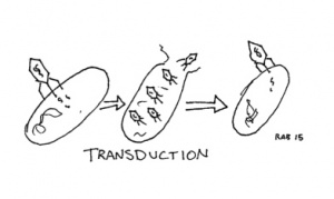 Transduction.jpg
